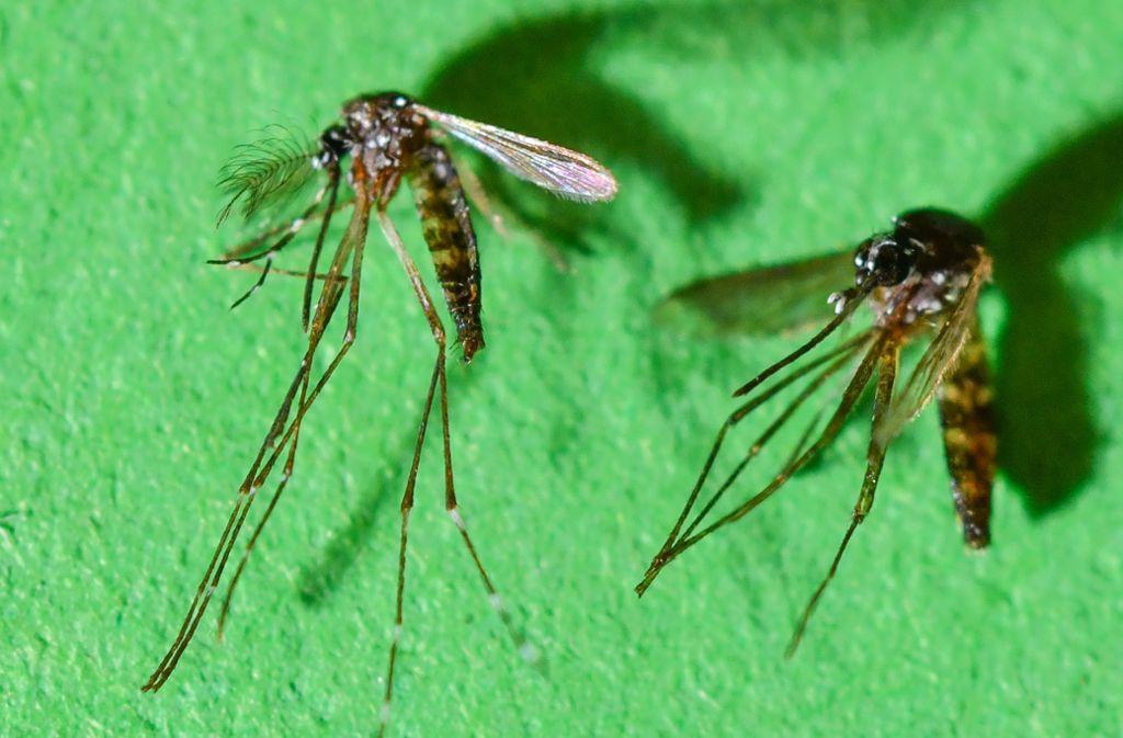 In Spanien sind die ersten Fälle einer Infektion mit dem Chikungunya-Virus im eigenen Land registriert worden. Foto: Patrick Pleul/dpa