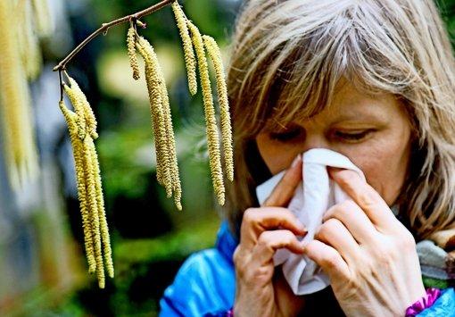 Schon seit Dezember sind einzelne Hasel-Pollen in der Luft. Foto: dpa