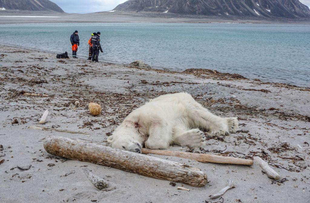 Wächter erschossen das Tier aus Notwehr. Foto: Governor of Svalbard/AP