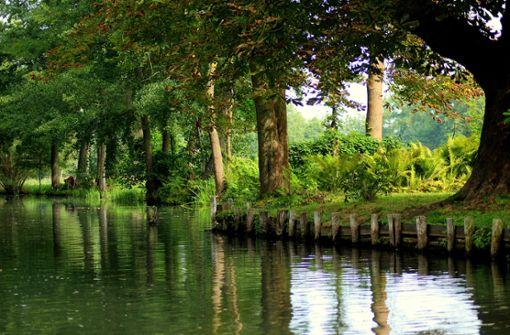 Für alle die ein bisschen Dschungel wollen. Mal fühlt sich der Spreewald nach lieblichem Märchenwald an, mal nach tropischem Urwald.