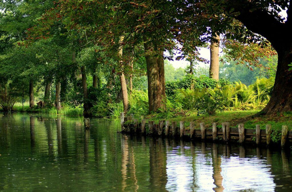 Für alle die ein bisschen Dschungel wollen. Mal fühlt sich der Spreewald nach lieblichem Märchenwald an, mal nach tropischem Urwald.  Foto: Pixabay