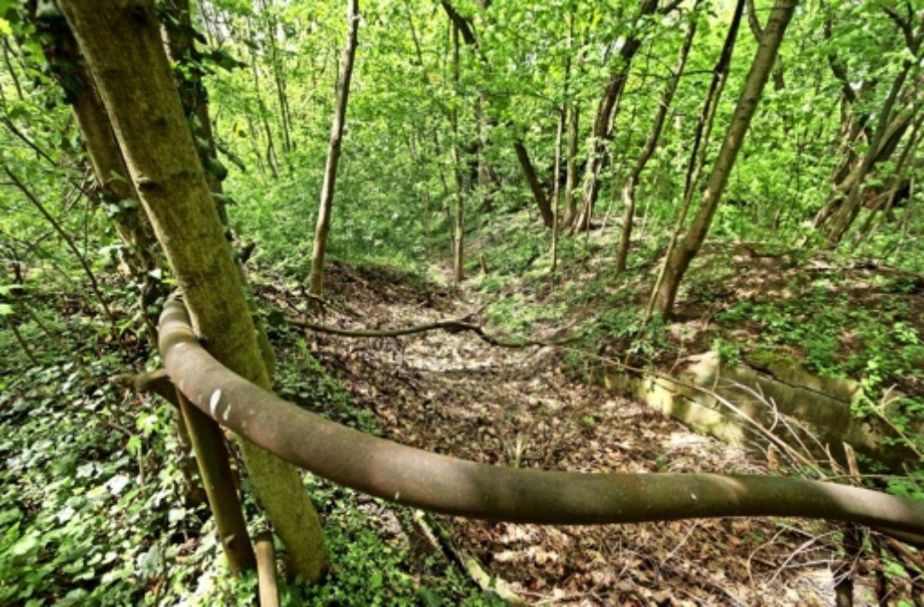 Der Wald im Osterholz gilt als ökologisch wertvoll – eigens geschützt ist er bislang allerdings nicht. Das will eine neue Initiative ändern. Foto: factum/Granville