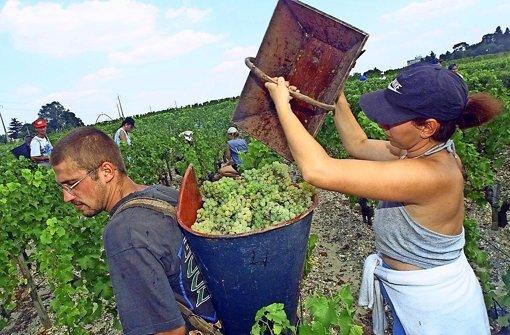 Frankreich will – wie hier bei der Ernte in  der Region Bordeaux – seine Weintradition schützen. Foto: AFP