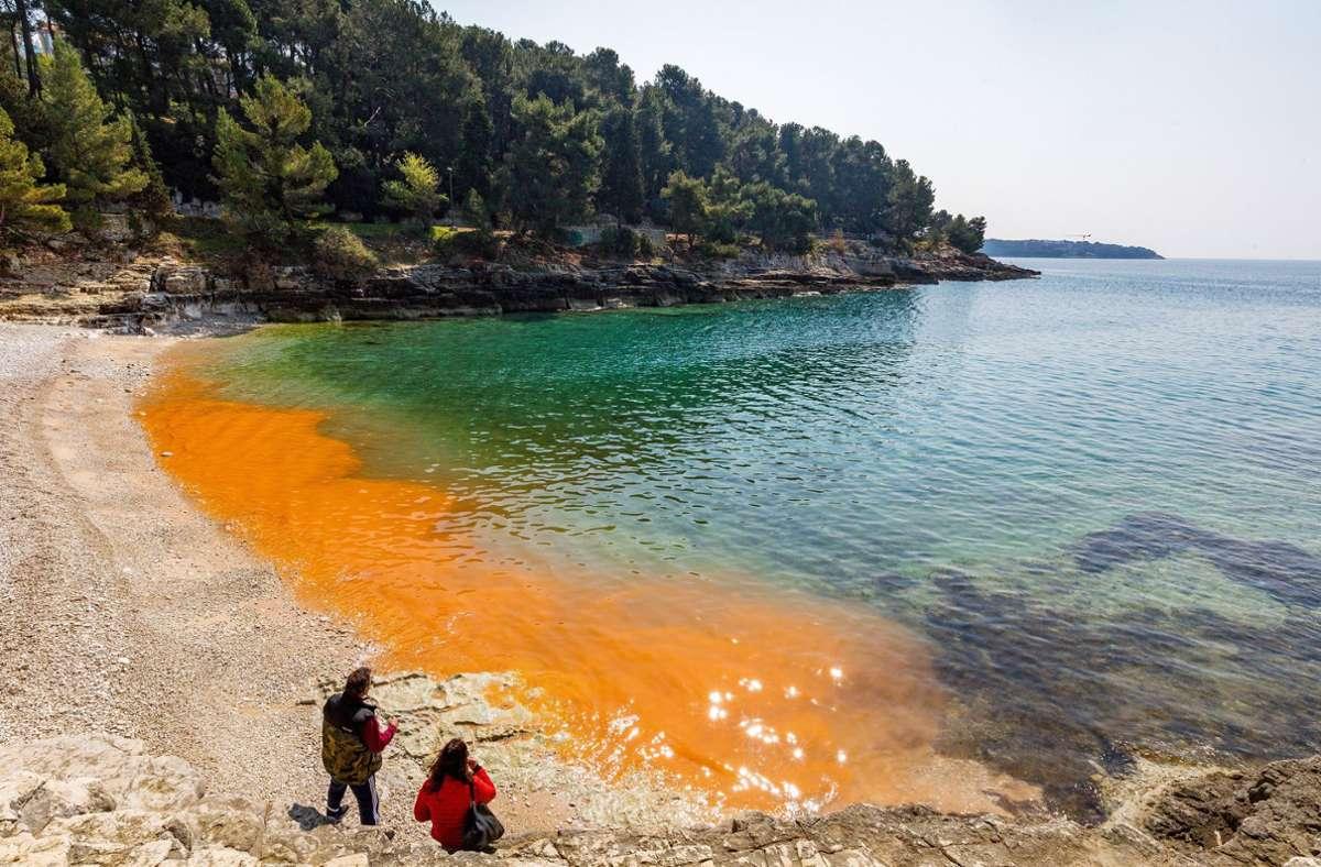 Algen färben das Meerwasser an diesem Strand in  Kroatien. Foto: dpa/Srecko Niketic