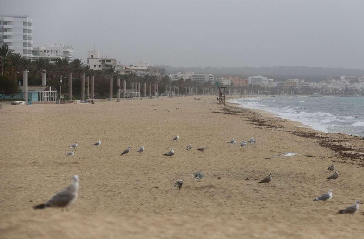 Vögel und Möwen am Strand von Arenal. Von Herbstferien ist auf Mallorca kaum etwas zu sehen. Die meisten Hotels sind zu, der Strand ist leer. Foto: dpa/Clara Margais