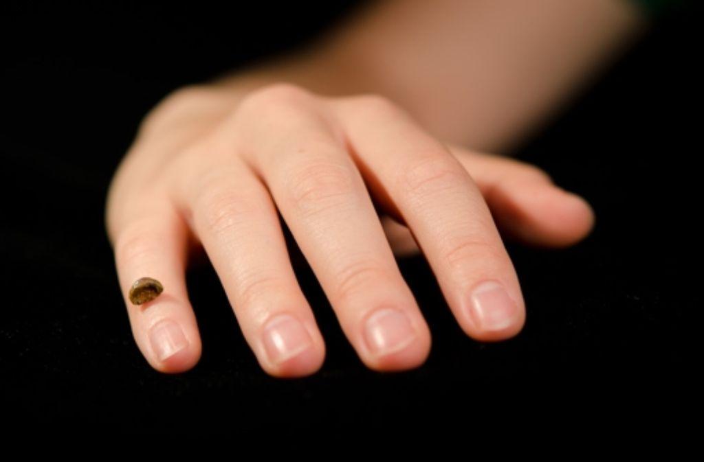 Die Nachbildung zeigt den kleinen Fingerknochen, aus dem die DNA isoliert wurde. Foto: MPI