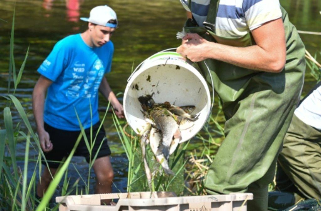 Giftiges Löschwasser hat in der Jagst zu einem massenhaften Fischsterben geführt. Foto: dpa