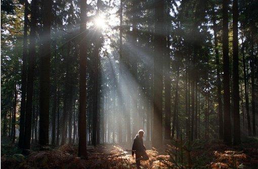 Der Wald als Fotomodell