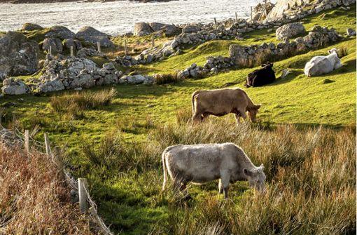 Brexit dämpft Wachstum auf grüner Insel