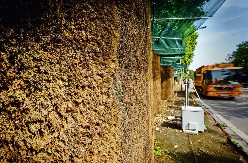 Die Mooswand entlang der Cannstatter Straße wird abgebaut. Nun finden noch Vergleichsmessungen statt. Foto: Lg/Zweygarth