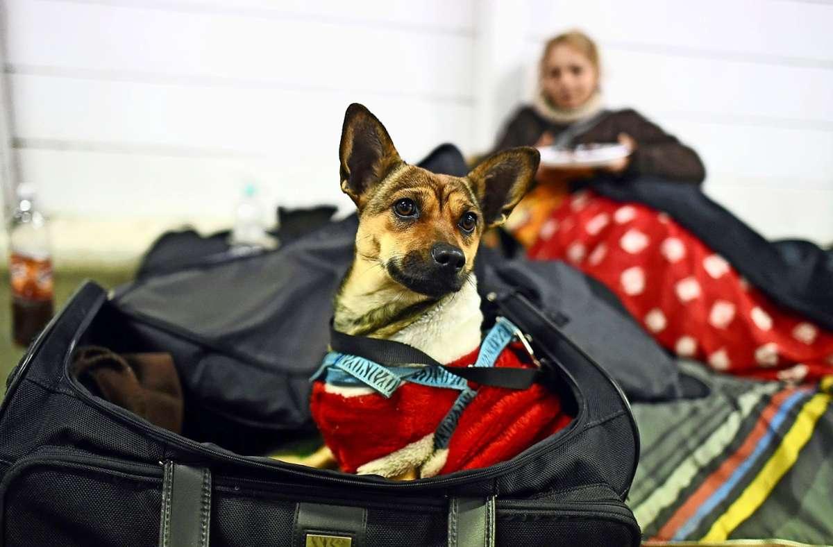 Sie müssen draußen bleiben: Tiere sind in Notunterkünften keine gern gesehene Gäste. Foto: dpa/Andreas Gebert
