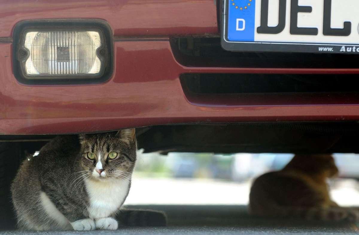 Auf der Weidacher Steige in Stetten, seie viele Autofahrer zu schnell unterwegs, sagt eine Anwohnerin, die dort bereits zwei Katzen verloren hat. Foto: dpa