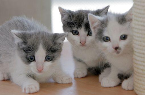 Hündin rettet fünf  Katzenbabys das Leben