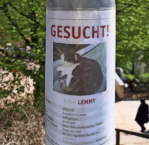 Dreister Betrug mit vermissten Tieren