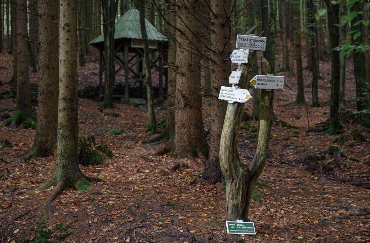 Ein Förster fand die achtjährige Julia mitten im Wald. Foto: dpa/Daniel Vogl