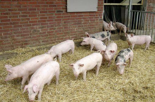 Hohenloher Landschwein ist jetzt eine Marke