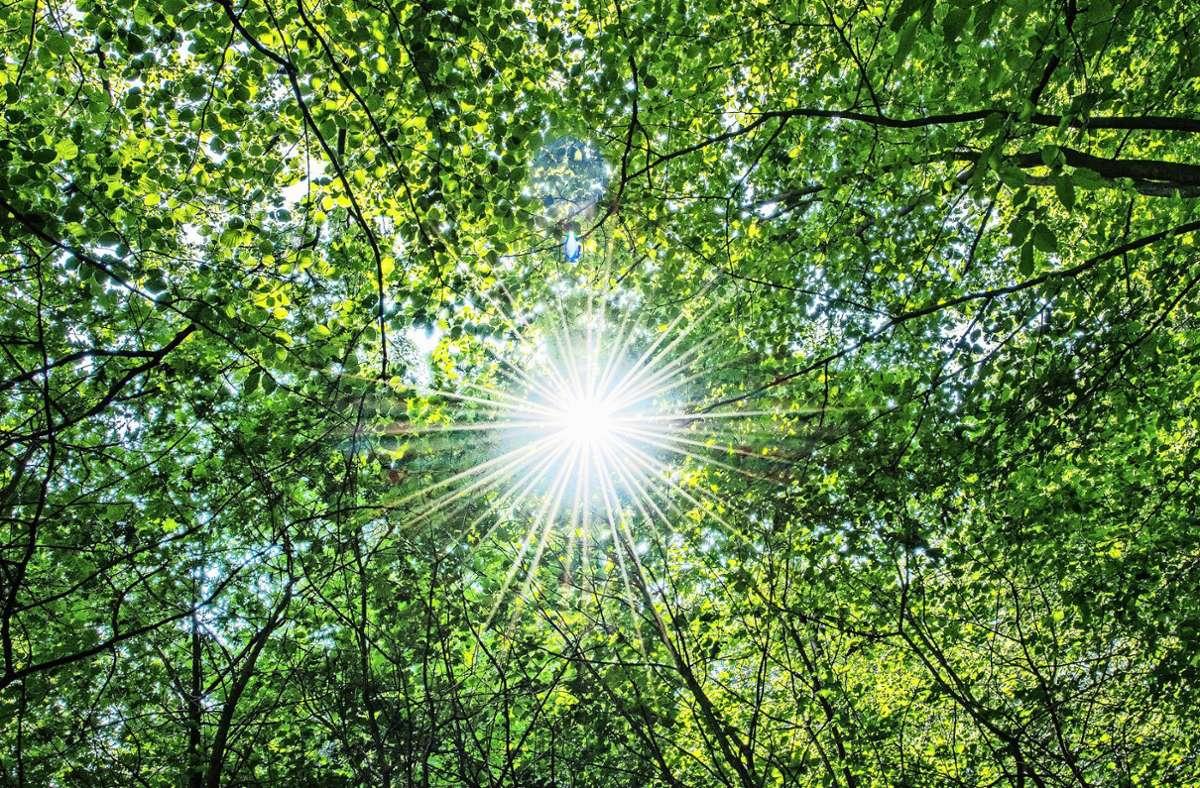 Was passiert, wenn ehemalige Ackerflächen zur Wiederbewaldung sich selbst überlassen werden? Dieser Frage geht ein Hohenheimer Forscherteam nach. Foto: dpa/Guido Kirchner