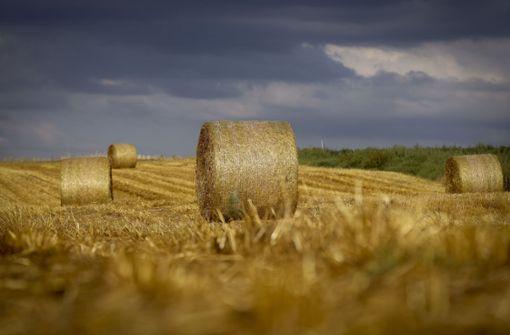 Überraschung bei der Getreideernte