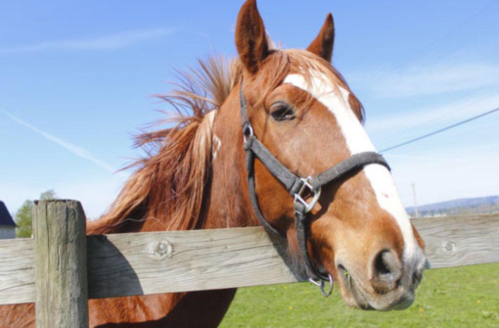 In Murr stürzt ein Pferd samt seiner Reiterin zu Boden. Die Frau wird lebensgefährlich verletzt. (Symbolfoto) Foto: Modfos/ Shutterstock