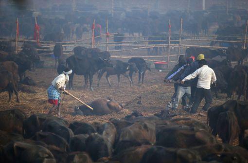 Blutiges Gemetzel für die Göttin –  Gadhimai Opferfest sorgt für Entsetzen