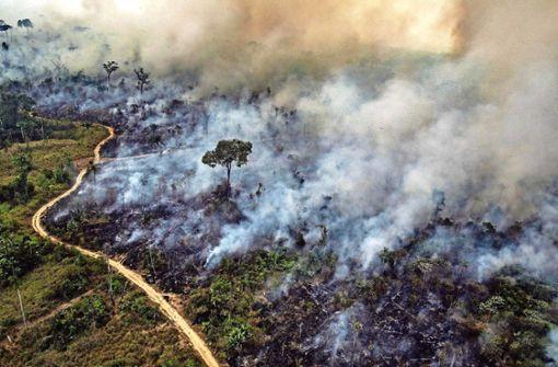 Hilft ein Boykott,  den Regenwald zu schützen?
