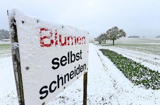 Im Obst- und Weingarten   tut der Frost weh