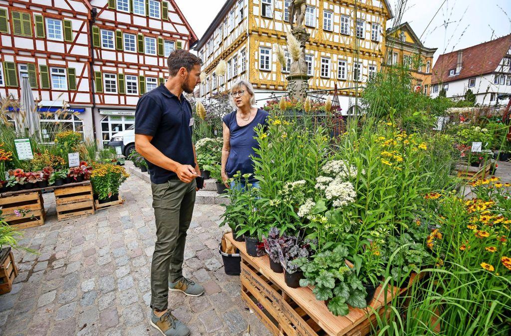 Beim Staudenmarkt gibt es sowohl  herbstliche Spätblüher als auch Gewächse, die im Frühjahr dem Garten Farbe verleihen. Foto: factum/Granville