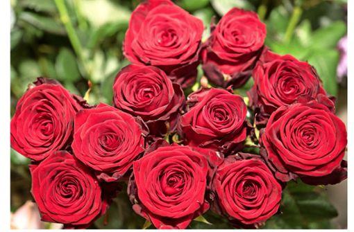 Blumen am Valentinstag?