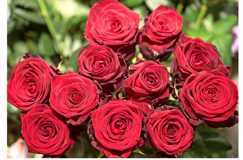 Rote Rosen gehen immer – oder ist das schon zuviel? Foto: dpa/Robert Günther