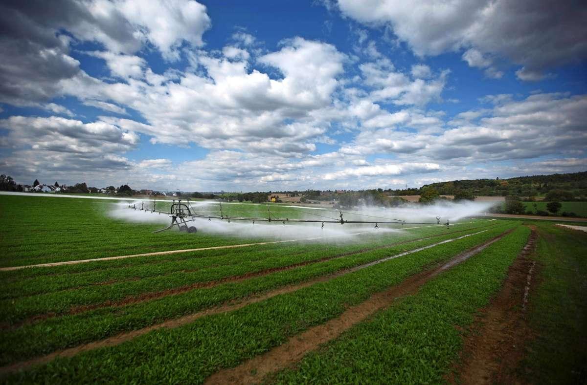 Bewässerung wird ein immer wichtigeres Thema werden, sagen Experten. Foto: Archiv  Gottfried Stoppel