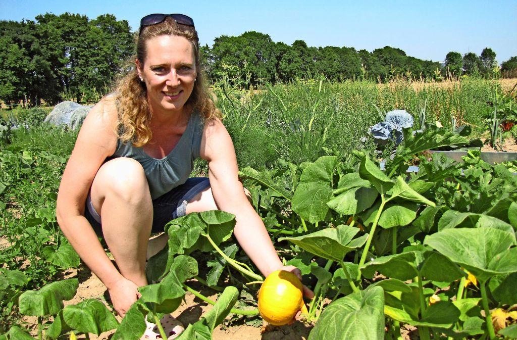 Der Kürbis im Garten von Silvia Zander braucht noch ein bisschen Zeit, bis er geerntet werden kann. Foto: Leonie Schüler