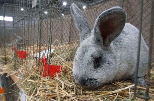 Kaninchenzüchter liefern sich heftige Prügelei