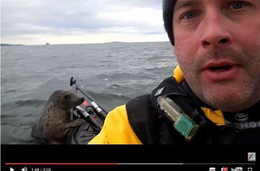 Frecher Seehund entert Kajak
