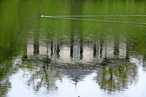 Fische dümpeln