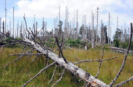 Schützenswerte Natur: Bannwald bei Kaltenbronn im Nordschwarzwald Foto: dpa