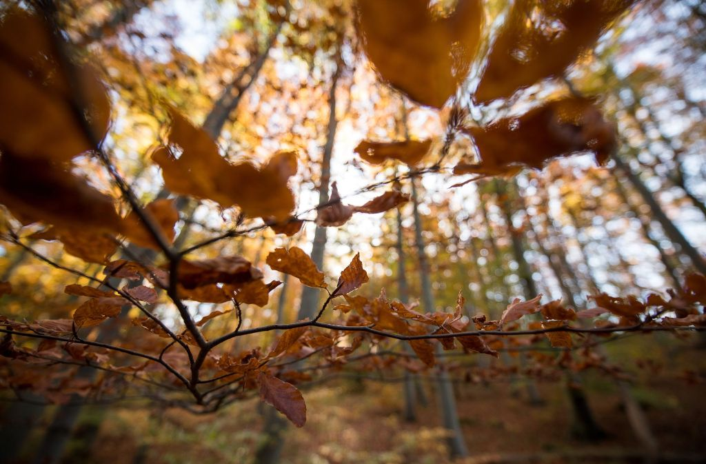 Im Fellbacher Stadtwald werden die abgestorbenen Bäume entfernt. Foto: dpa