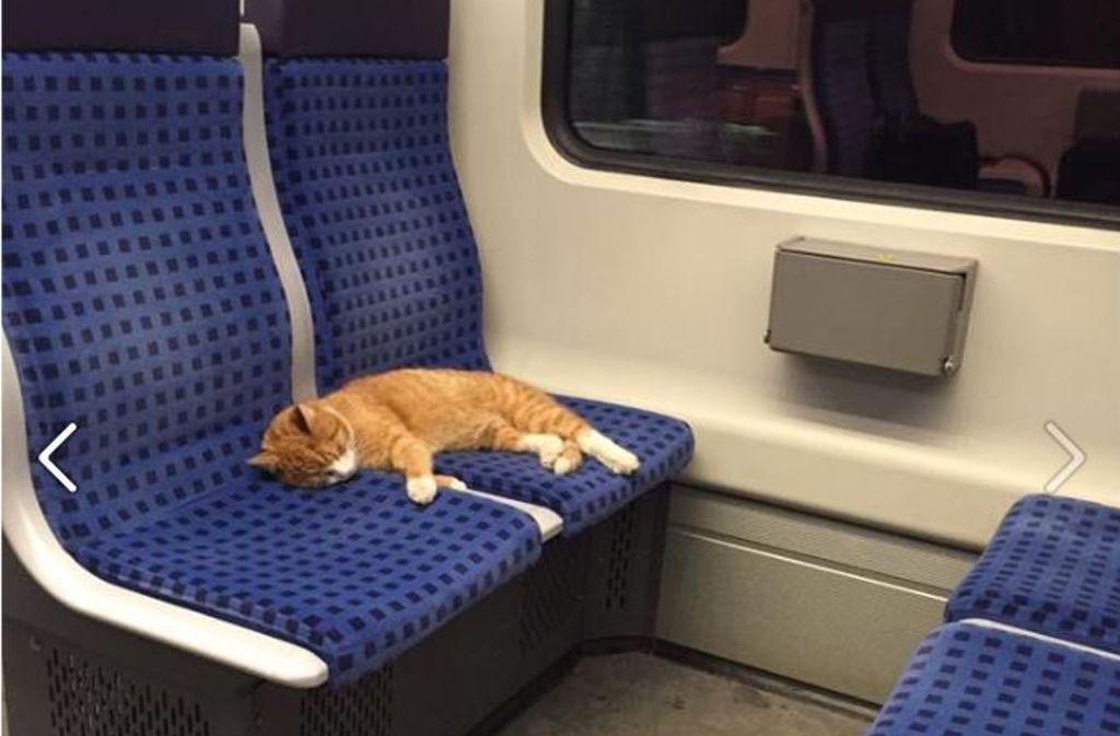 Die kleine Katze hat es sich auf den Sitzen der S-Bahn S1 gemütlich gemacht. Foto: Screenshot Facebook/Patrick Maurer