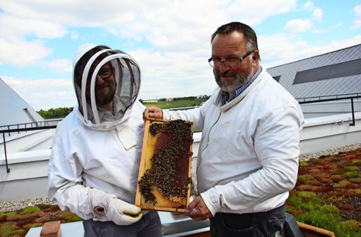 Bienen schwärmen vom Bosch-Gelände aus