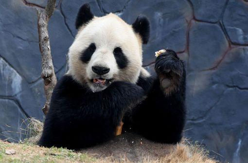 Den Panda schützen, aber nicht den Regenwurm