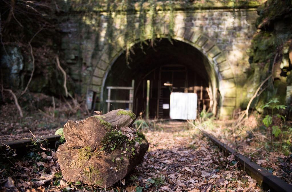 In den alten Tunnels leben viele Fledermäuse. Foto: dpa