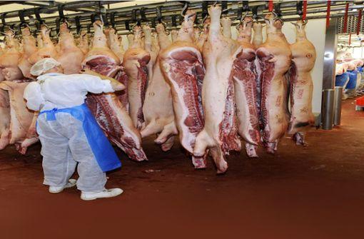 Tierschützer sehen viel Leid in Schlachthöfen