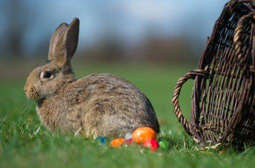 Teils sonnig: Eiersuchen im Freien  gesichert
