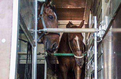 Pferdetransporter beginnt zu brennen