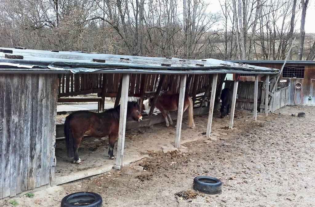 Esel und Pferde teilen sich den Unterstand der Jugendfarm Freiberg/Rot. Er ist in die Jahre gekommen und soll möglichst noch in diesem Jahr einem Neubau weichen. Foto: Jugendfarm (z)