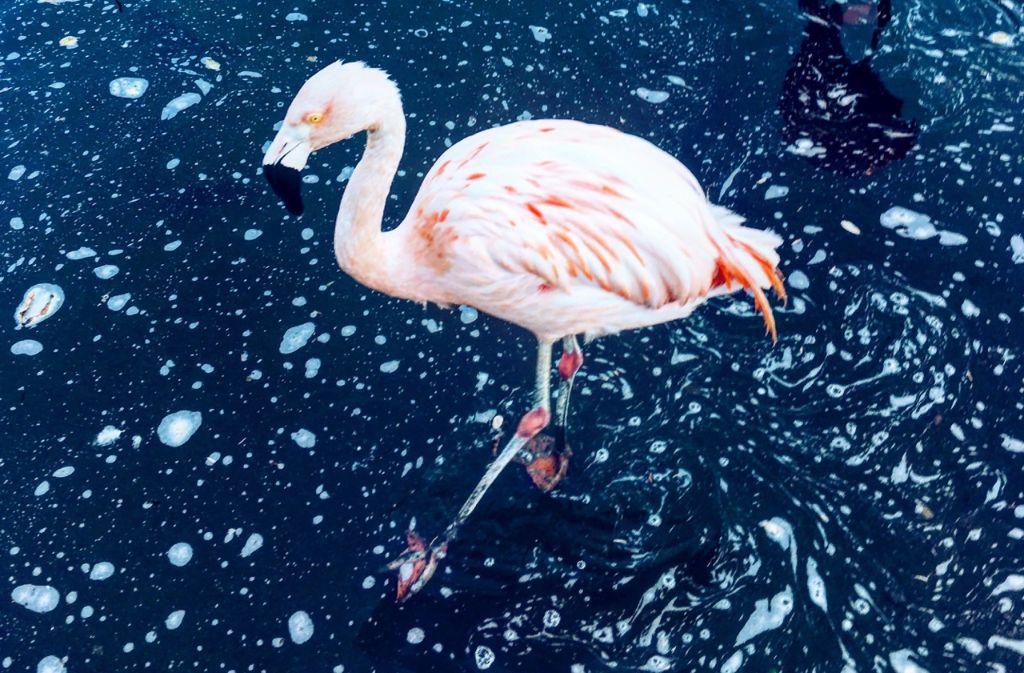Ungewöhnliche Tier-Begegnungen sind in Stuttgart nicht selten. Foto: Tanja Simoncev