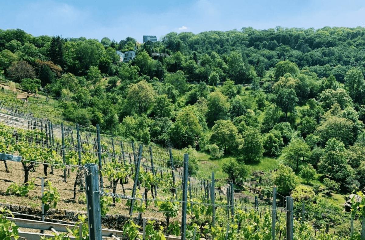 Ein neuer Ausflugstipp will angegangen werden! Diesmal führt uns der Schimmelhüttenweg durch idyllische Weinberge und vorbei an romantischen Schrebergärten. Foto: Meltem Yurt