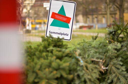 Wohin mit noch nicht entsorgten Weihnachtsbäumen?