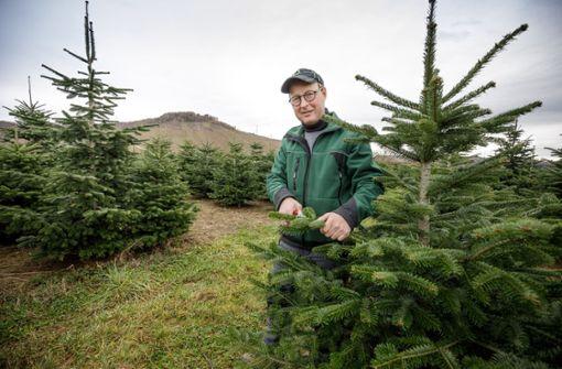 Darum verkauft Markus Silcher Weihnachtsbäume statt Wein