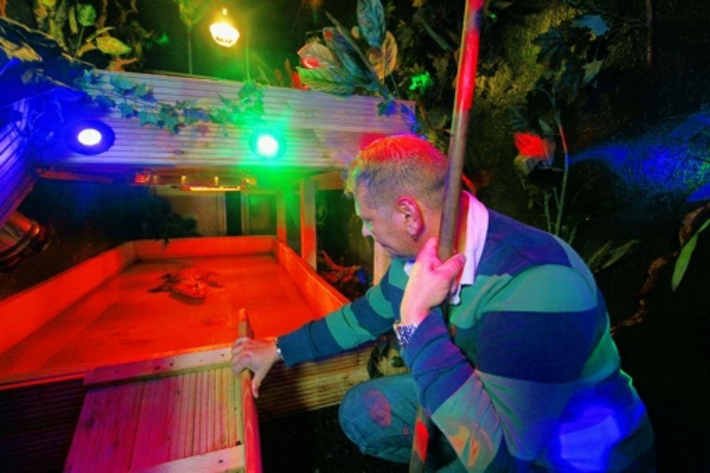 Willy Spindler hat 300 Reptilien – darunter auch einen Alligator Foto: factum/Granville