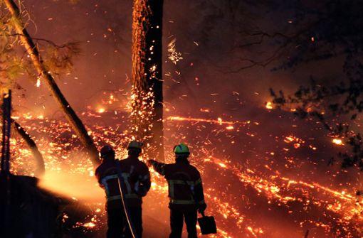 Waldbrand zerstört Bäume und etliche Häuser